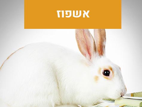 אשפוז חיות מחמד מרפאה וטרינרית פרישמן דיזינגוף