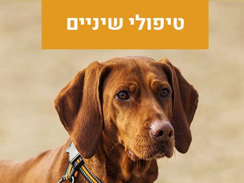 טיפולי שיניים לכלבים מרפאה וטרינרית פרישמן דיזינגוף