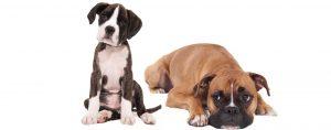 הטסת בעלי חיים - מרפאה וטרינרית פרישמן דיזינגוף
