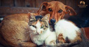 חיסון בעלי חיים